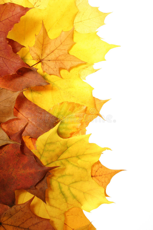 Free Autumn Leaves Stock Photos - 1532733