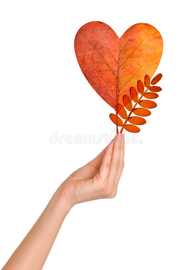 Autumn leaves. Woman holding autumn leaf as a heart and glass rowan leaf royalty free stock photos