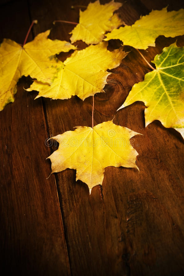 Download Autumn Leaves stock photo. Image of rusted, nature, divided - 16702520