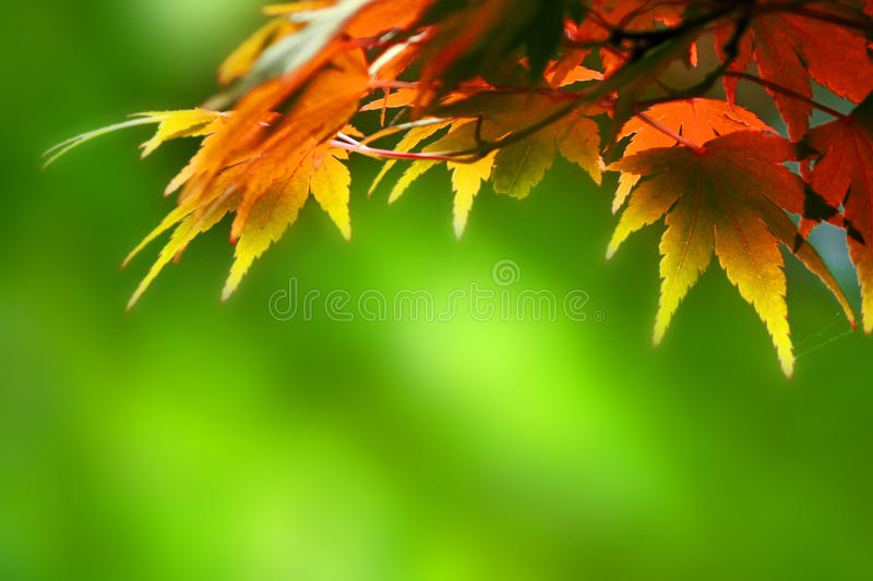 Autumn leaves. With green background stock photography