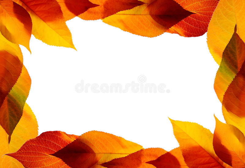 Download Autumn leaves stock image. Image of isolated, color, design - 19206229