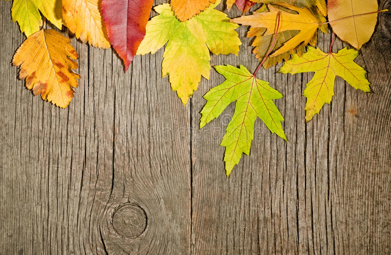 Download Autumn leaves stock image. Image of wood, fall, background - 19559537