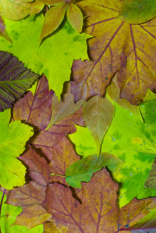 Free Autumn Leaves 2 Royalty Free Stock Images - 6578489