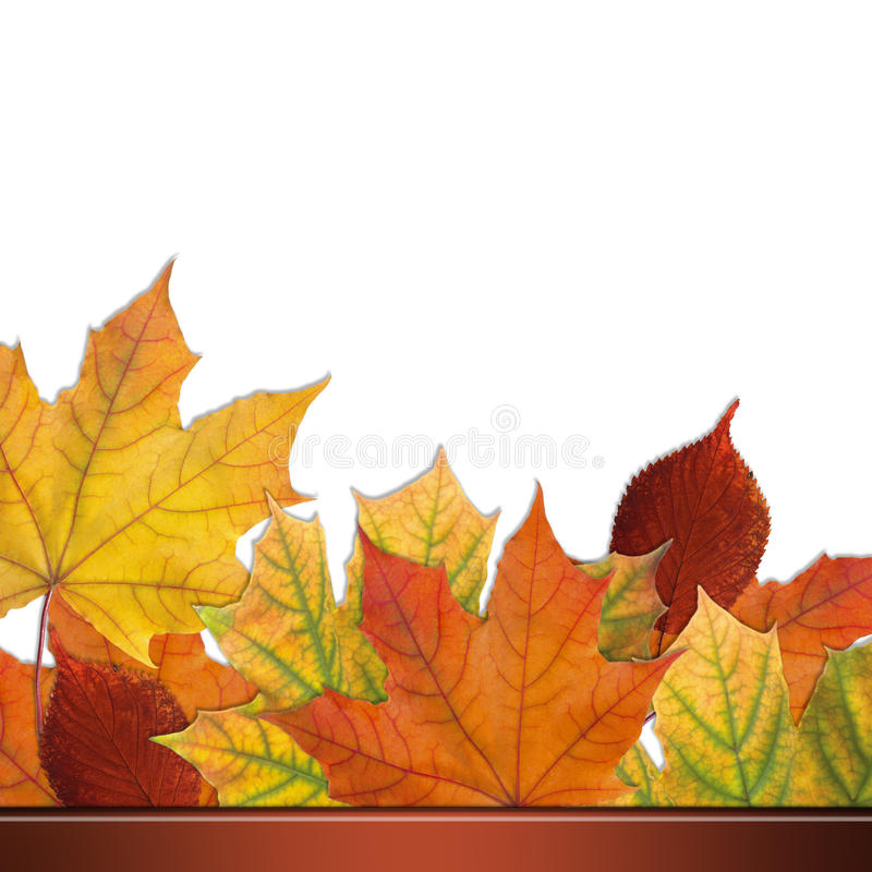 Download Autumn Leaves Royalty Free Stock Photography - Image: 21473507