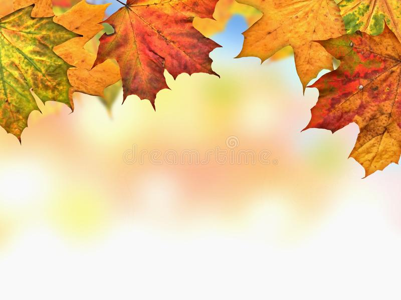 Download Autumn Leaves stock image. Image of park, maple, forest - 21509565