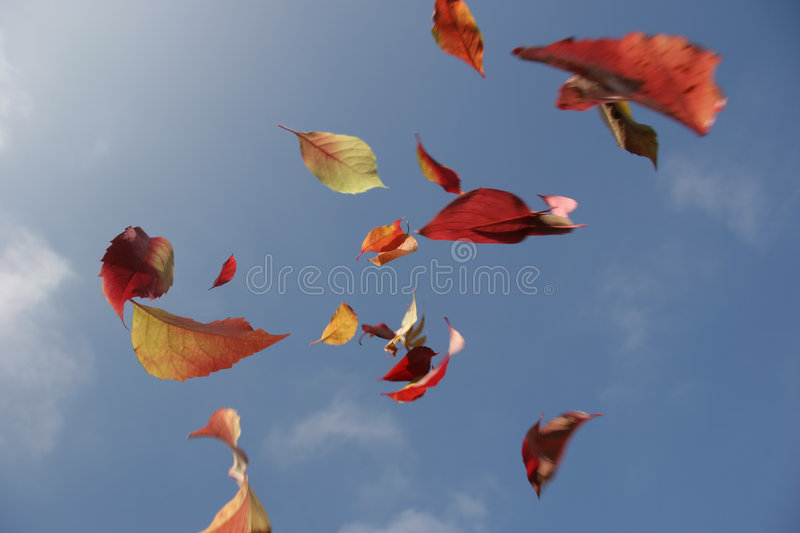 Autumn leaves. Colored leaves falling from the sky royalty free stock photography