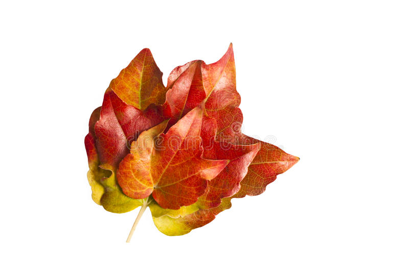 Download Autumn leaves stock image. Image of plant, plants, autumn - 22328409