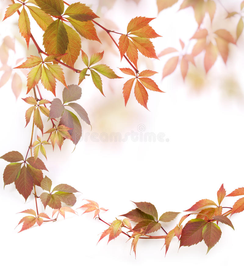 Autumn leaves. Autumn yellow leaves, selective focus stock photos