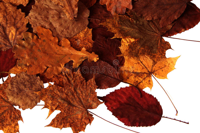 Download Autumn Leaves stock image. Image of fresh, foliage, yellow - 22941461