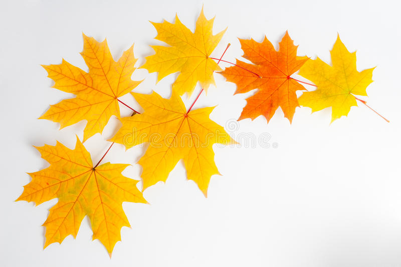 Download Autumn leaves stock image. Image of green, change, october - 22997717