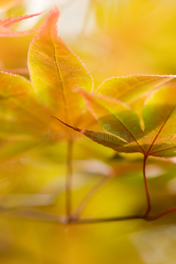 Download Autumn Leaves stock photo. Image of leaf, yellow, golden - 2307502