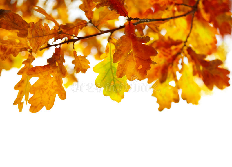 Download Autumn Leaves stock image. Image of copy, leaves, color - 25306319