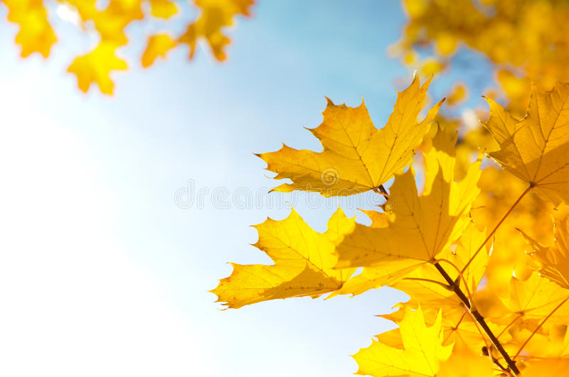 Autumn leaves. Under a sunny blue sky stock images