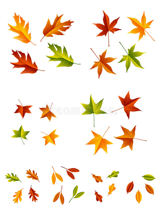 Autumn Leaves. A set of leaves for the fall season in different colors and styles