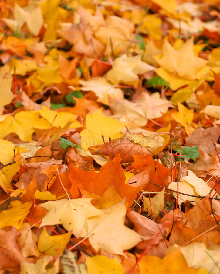 Download Autumn Leaves Royalty Free Stock Photography - Image: 26604537