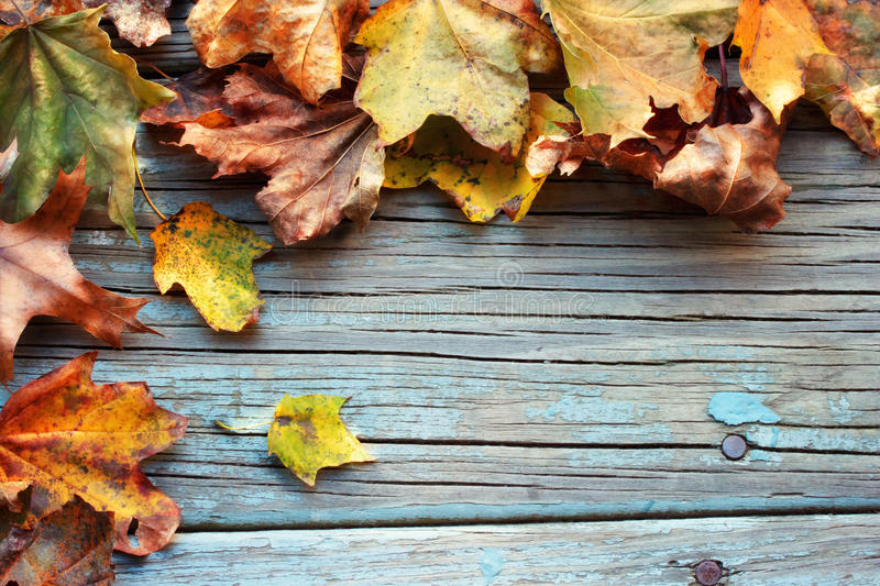Autumn leaves. On wooden board royalty free stock images