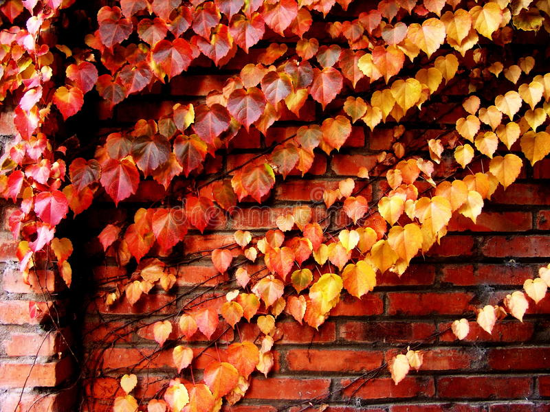 Download Autumn leaves stock image. Image of colors, common, plant - 27198213