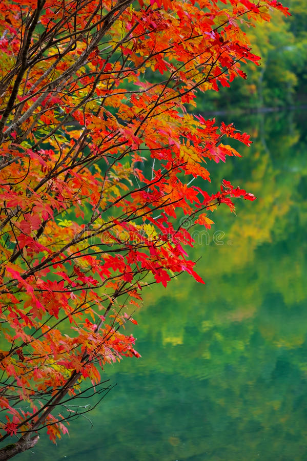 Download Autumn Leaves Stock Images - Image: 27372144