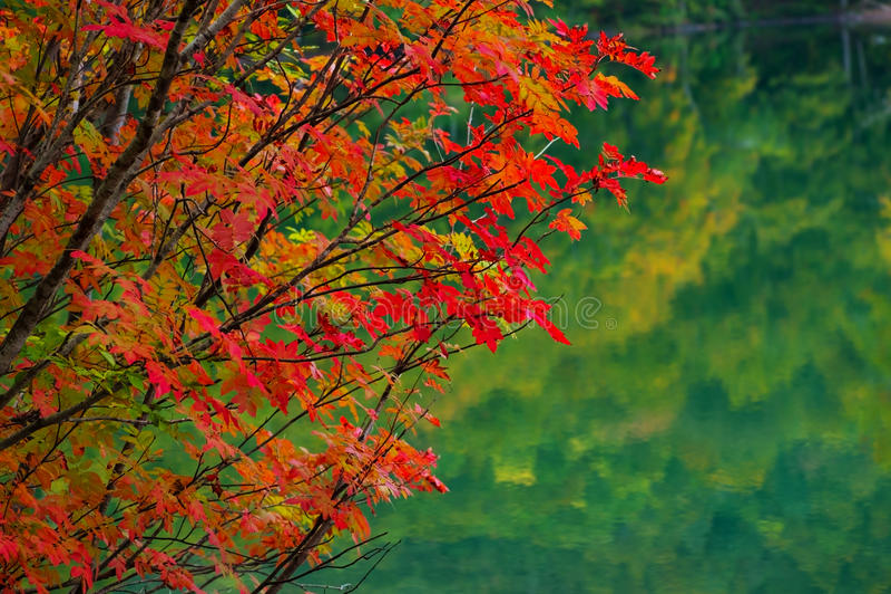 Download Autumn leaves stock photo. Image of landscape, foliage - 27372156