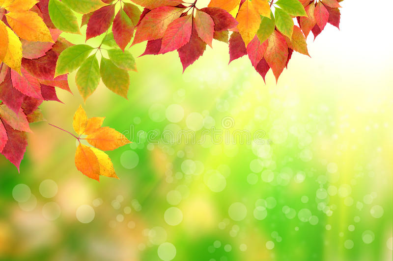 Autumn leaves. On the background of the solar forest royalty free stock photos