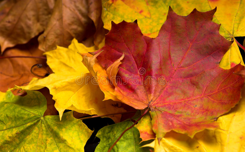 Download Autumn Leaves Stock Image - Image: 3546351
