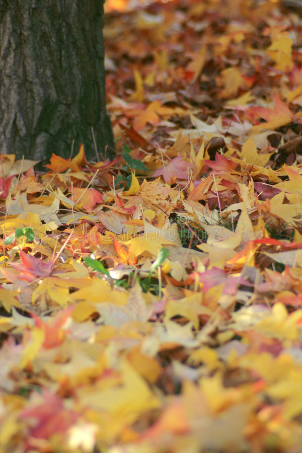 Download Autumn leaves stock image. Image of colour, grown, beauty - 3595373