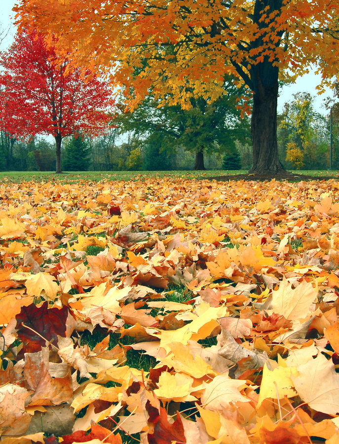 Free Autumn Leaves Stock Images - 3739244