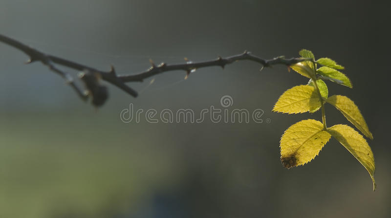 Autumn Leaves arkivfoton