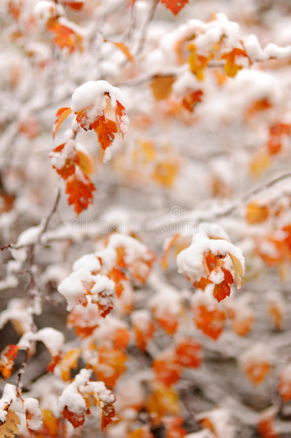 Free Autumn Leaves Royalty Free Stock Photography - 38939457