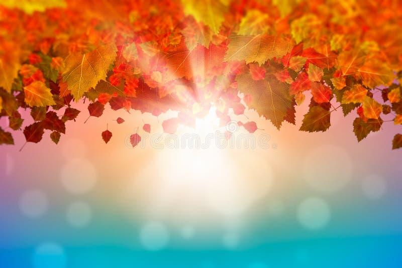 Autumn Leaves royalty-vrije stock fotografie