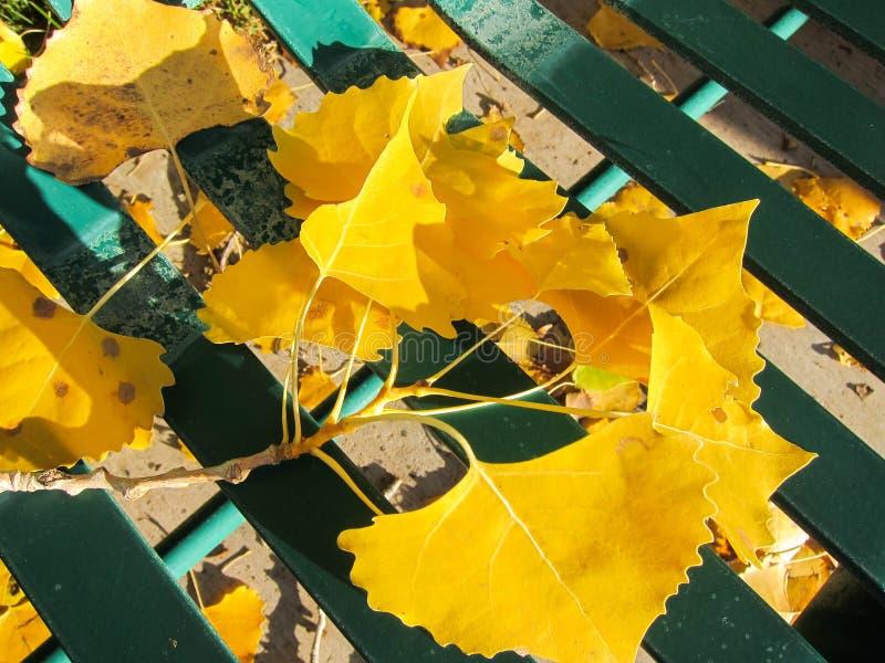 Autumn Leaves image libre de droits