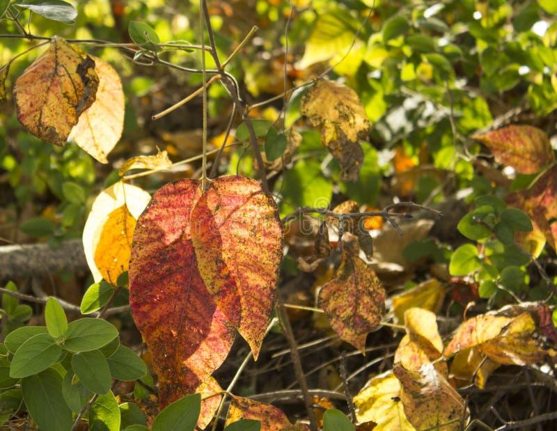 Download Autumn Leaves photo stock. Image du flore, après, lumineux - 45358800