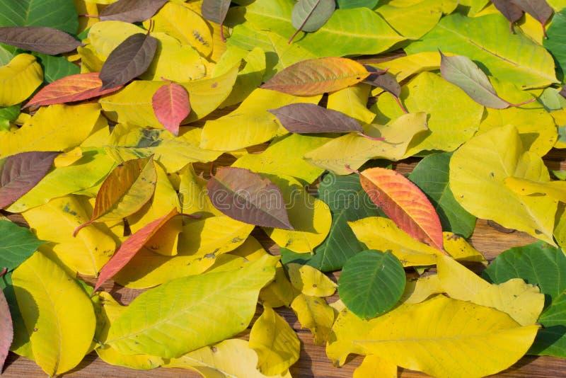 Download Autumn Leaves photo stock. Image du brun, bois, célébrations - 45359356