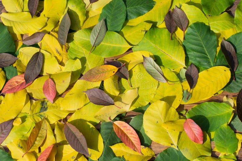 Download Autumn Leaves image stock. Image du vacances, orange - 45359407