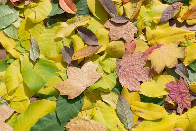 Download Autumn Leaves image stock. Image du vacances, milieux - 45359495