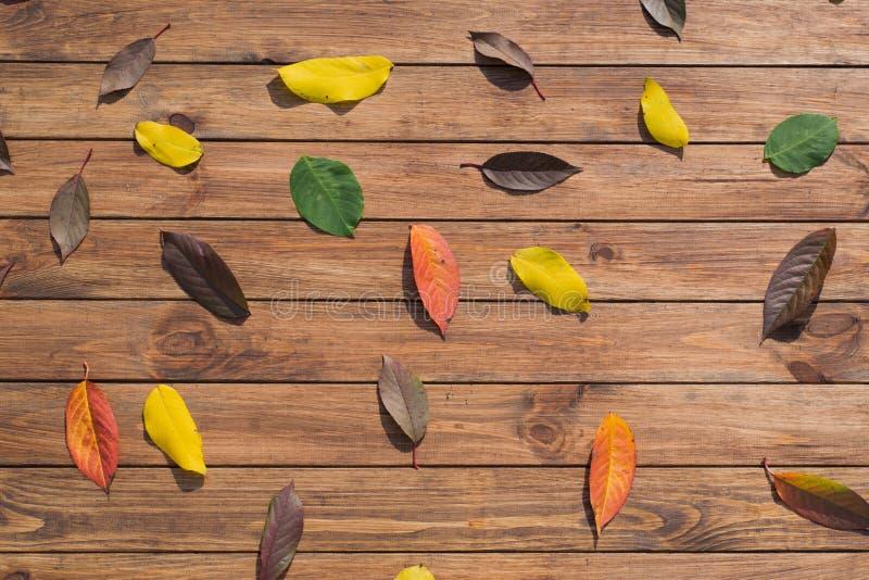 Download Autumn Leaves image stock. Image du rouge, bois, vacances - 45368291