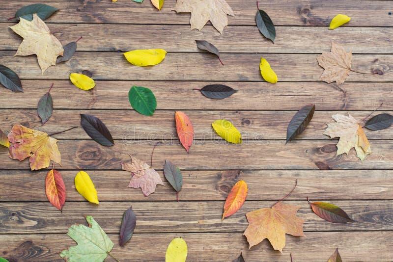 Download Autumn Leaves photo stock. Image du milieux, célébrations - 45368324
