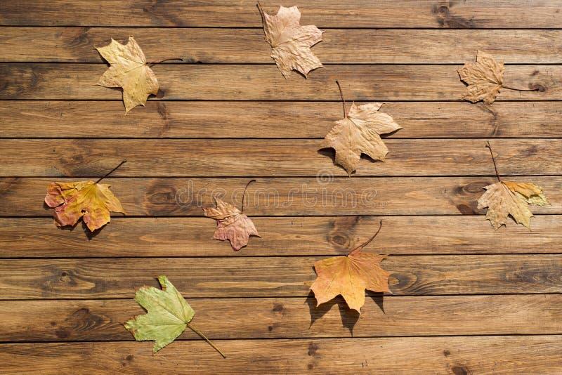 Download Autumn Leaves image stock. Image du érable, couleur, nature - 45368505