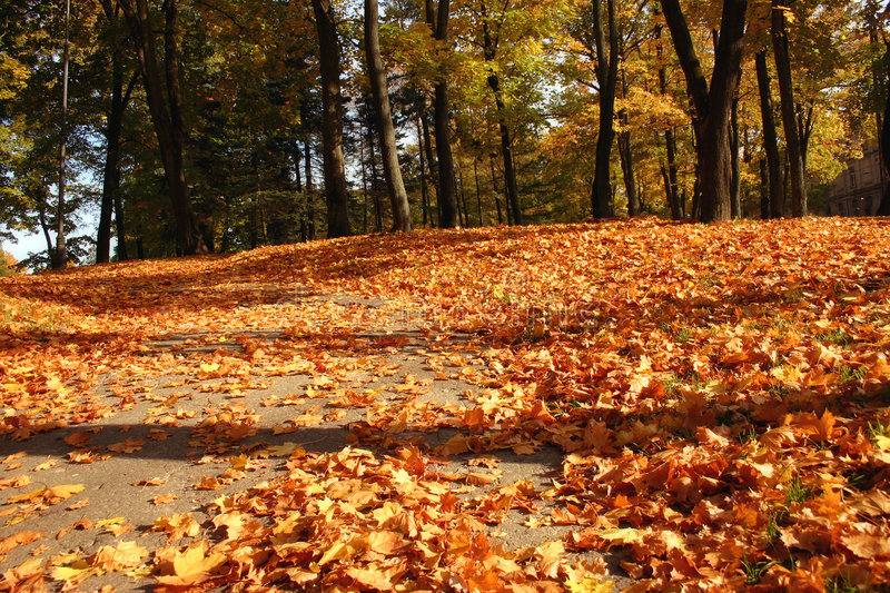 Download Autumn leaves stock image. Image of trees, maple, tree - 515363