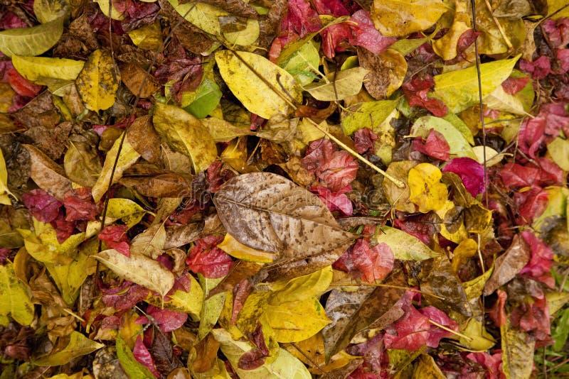 Autumn Leaves stock afbeeldingen