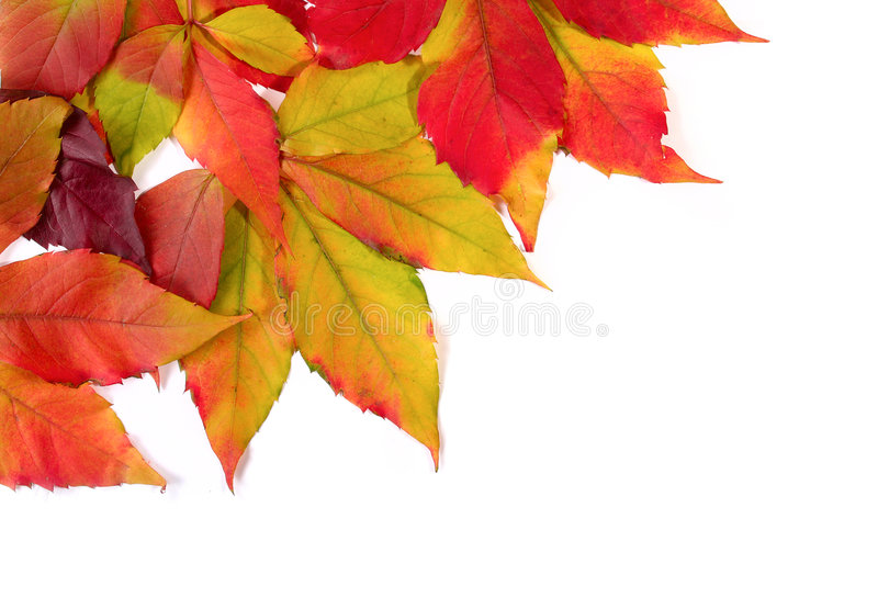 Autumn leaves. Red and orange and yellow stock photography
