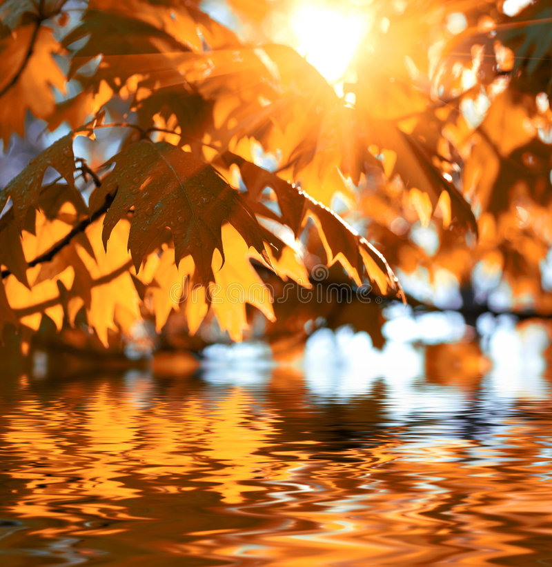 Download Autumn leaves stock photo. Image of autumn, outdoors, light - 6573194