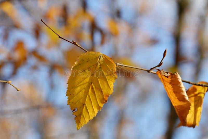Autumn Leaves imagem de stock