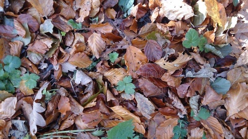 Autumn Leaves photo stock
