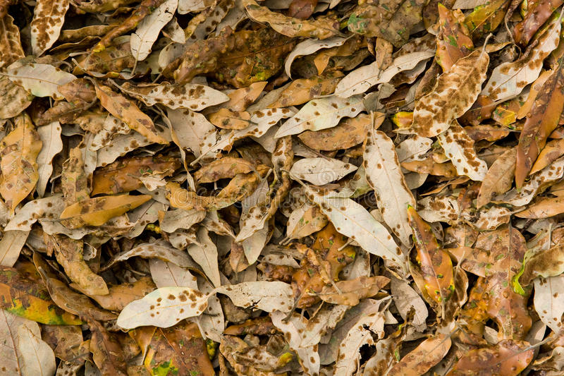 Download Autumn Leaves photo stock. Image du brun, recouvrement - 77159058