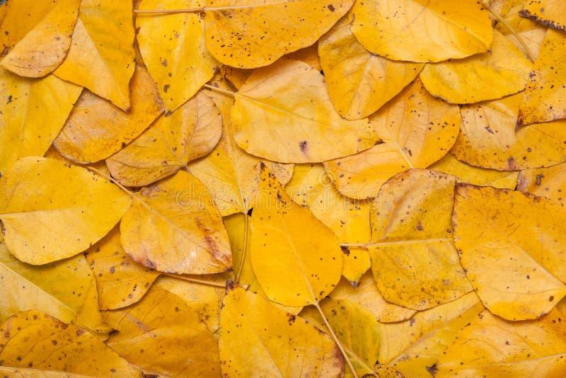 Download Autumn Leaves image stock. Image du texture, tombé, recouvrement - 77162405