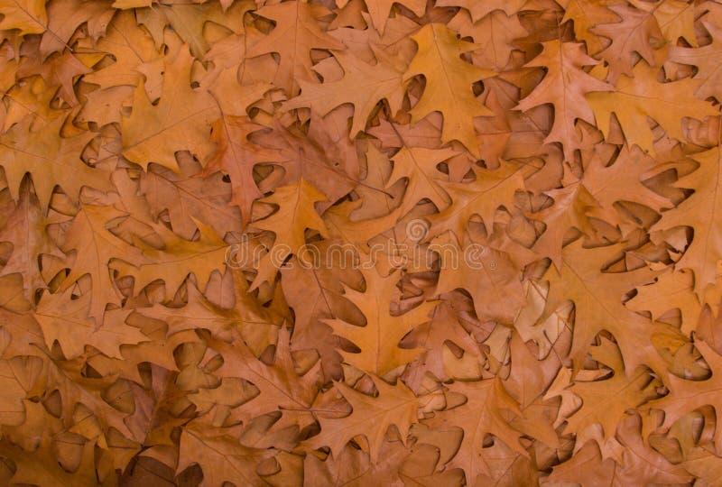 Download Autumn Leaves photo stock. Image du recouvrement, automne - 77162792