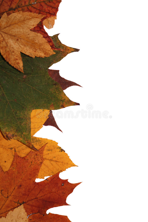 Autumn leaves. Colorful autumn leaves for background royalty free stock photos