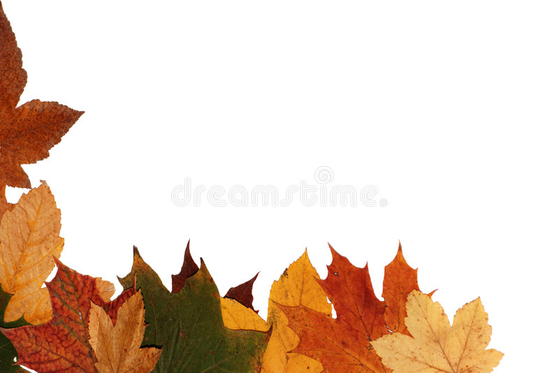 Download Autumn leaves stock image. Image of closeup, colorful - 7717189