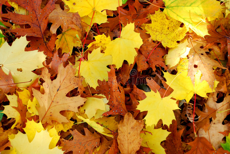 Download Autumn Leaves stock image. Image of golden, aturate, brown - 7761291